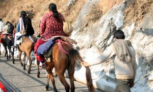 Pony Ride in Jammu and Kashmir