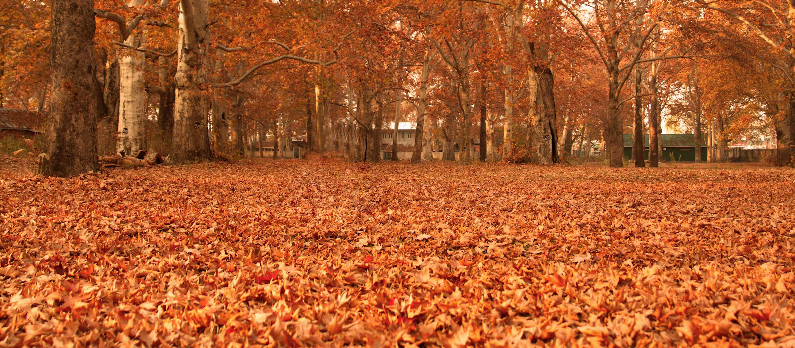 autumn season in kashmir