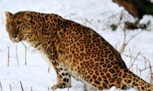 Explore Wildlife in Jammu & Kashmir
