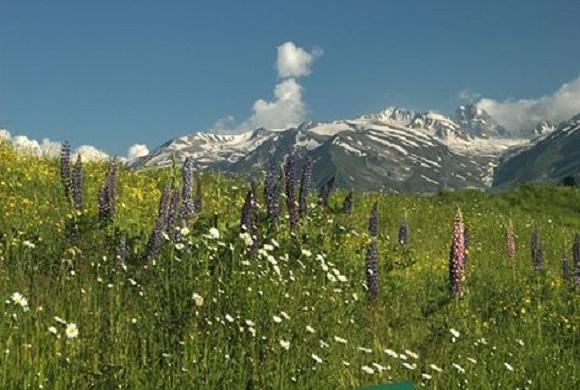 Nagin-valley-Gulmarg-kashmir