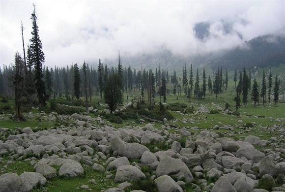 Seoj-meadow-bhaderwah