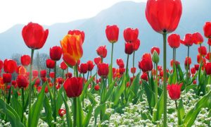 Most Beautiful Gardens in Jammu & Kashmir