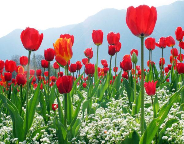 Beautiful Destinations in Kashmir No One Should Miss
