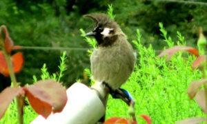 Birds of Ladakh