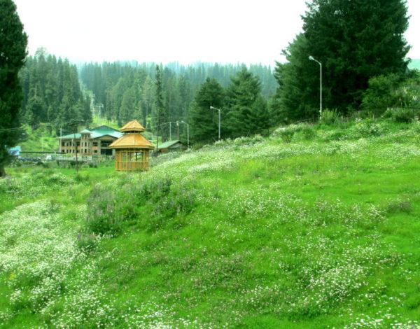 Gulmarg Biosphere Reserve