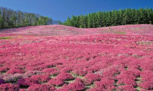 Most Beautiful Plants in Jammu and Kashmir