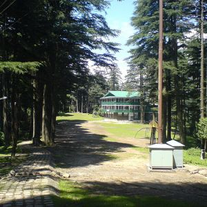 Forests-In-Patnitop